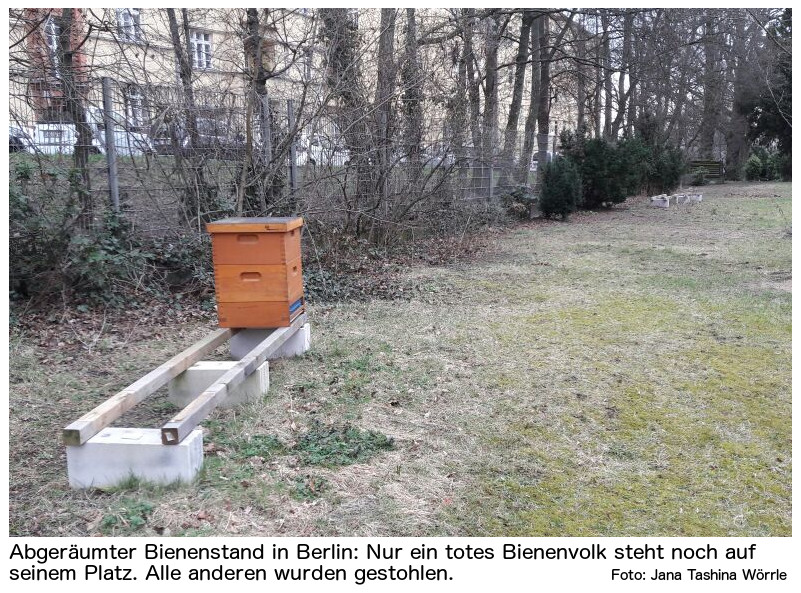 bienen gestohlen was jetzt zu tun ist beekeepers24. Black Bedroom Furniture Sets. Home Design Ideas