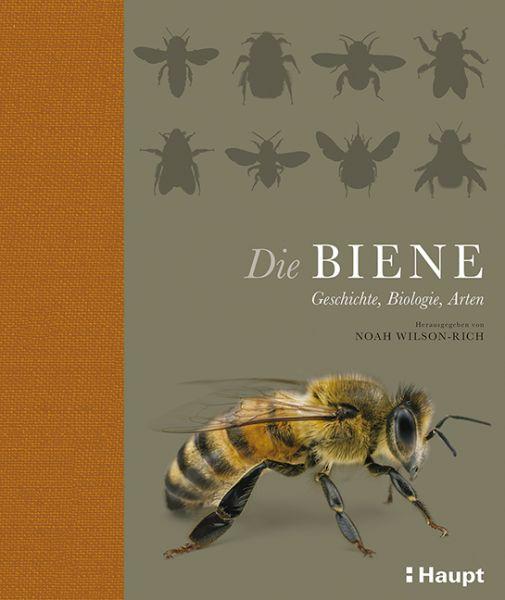 Wilson-Rich, Die Biene - Geschichte, Biologie, Art
