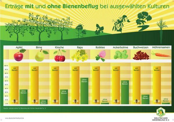 """Plakat """"Bienenbeflug"""", DIN A1"""
