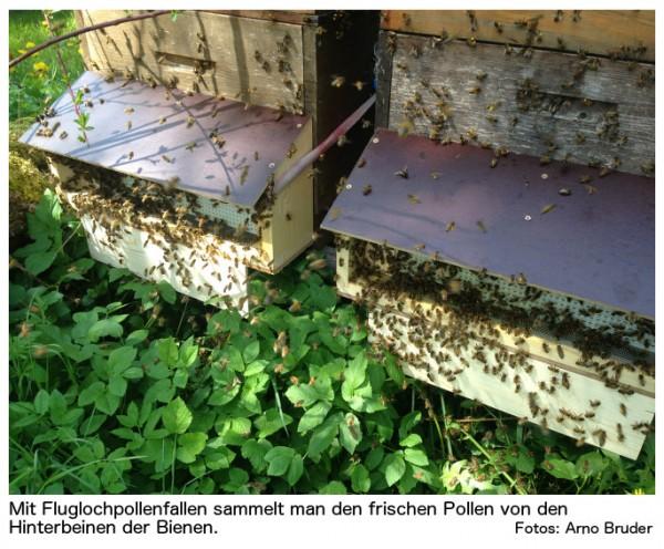 Pollenfalle