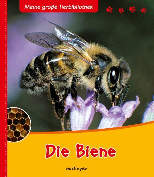 Tracqui, Die Biene