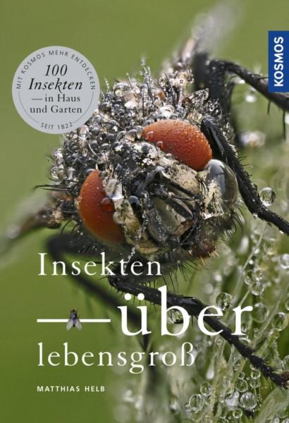 Helb, Insekten überlebensgroß